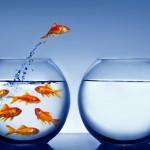 Memilih Ikan Hias untuk Satu Aquarium