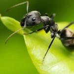 ant-1920-1080-7521-150x150 ant-1920-1080-7521-150x150  wallpaper