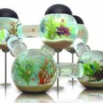 Memilih Mini Aquarium untuk Ikan Hias Kecil