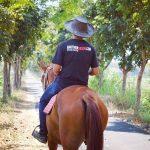 Berkuda Menyusuri Sawah di Bale Kuda Stable