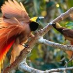 Adat Sasi; Konservasi Hutan Berbasis Kearifan Lokal Masyarakat Adat Papua